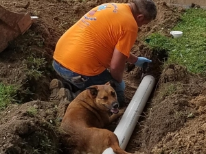Plumbing... it's a dogs life, lol! In the heat of summer, one of the coolest places to be is in a newly dug hole.